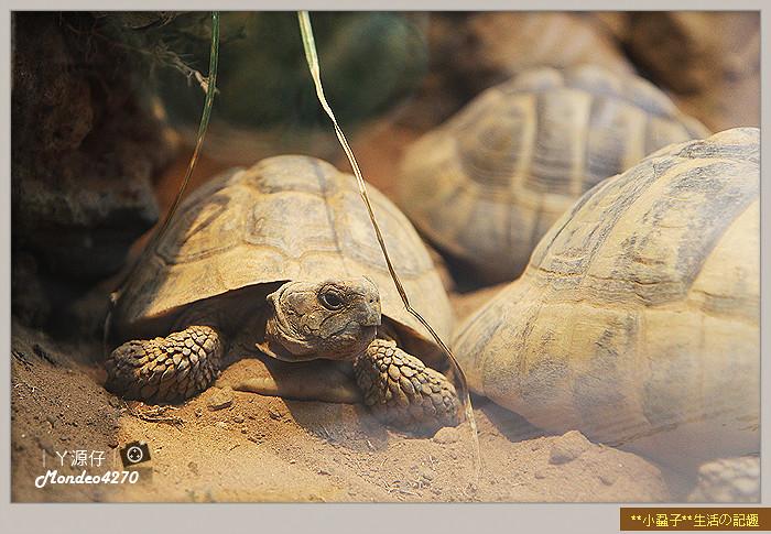 木柵動物園(圓仔)74