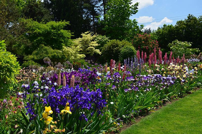 Dirt Therapy Schreiner 39 S Iris Gardens Salem Oregon