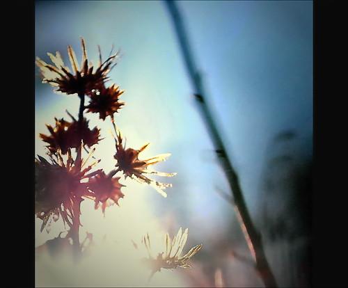 Sunny day by Damir B.
