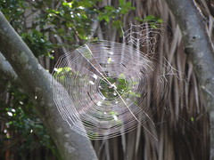big spider web