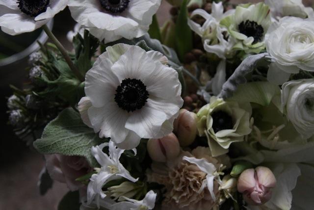 anemone_1