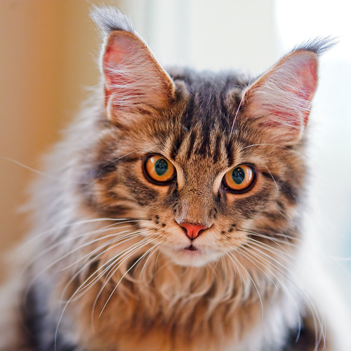 [フリー画像素材] 動物 1, 猫・ネコ ID:201112041000