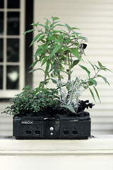 flowerpot, branch, plant, houseplant, produce,