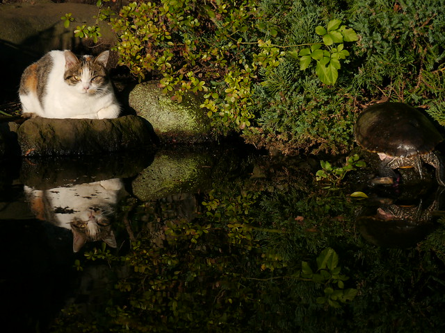 cat and turtle III