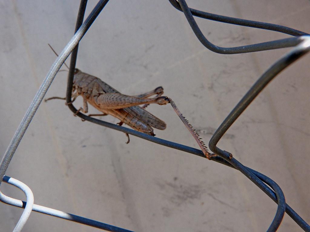 23-11-2011-grasshopper4