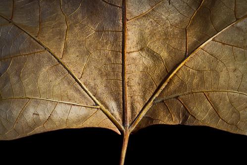 342/365 Texturas de otoño por Juan R. Velasco