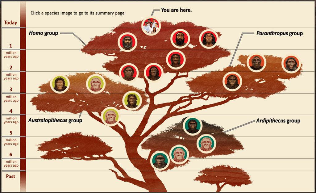 human and evolution The origin and evolution of humans historical background paleoanthropology •the study of human origins and evolution through fossils, artifacts, and dna •combines paleontology with physical.