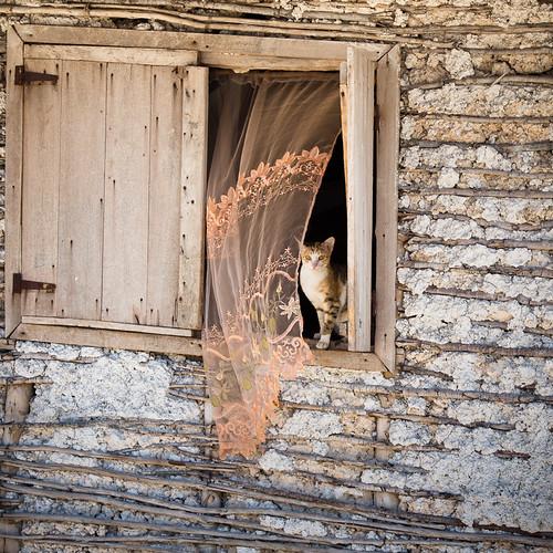 Le chat et le rideau, par Franck Vervial