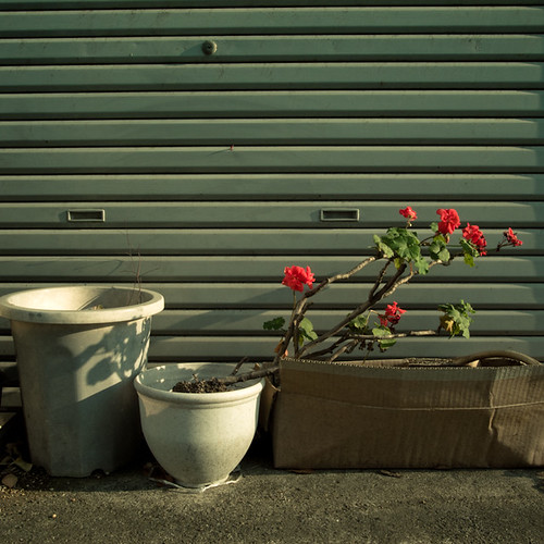 Trio One Life, Potted Garden