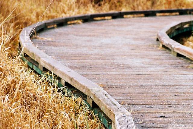 Mercer Slough Boardwalk
