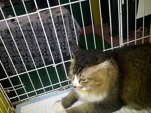Karnival Kucing Comel Perlis 2011
