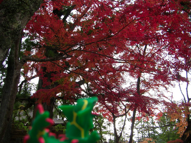 Photo:Rayquaza in Koya,Wakayama 67 (Kongobuji Temple) By Kasadera