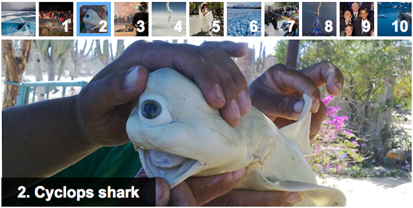 Cyclops Shark (de 'Pisces Fleet Sportfishing' en 'Top Viral Photos of 2011')