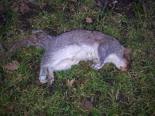 Sleepeh Squirrel