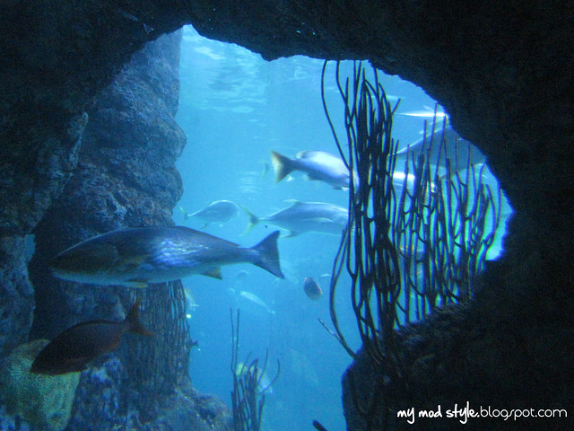 Denver Aquarium 14