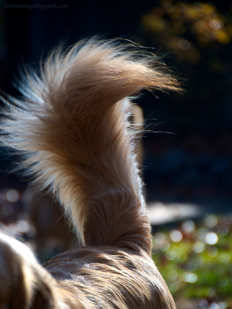 Henry's Tail
