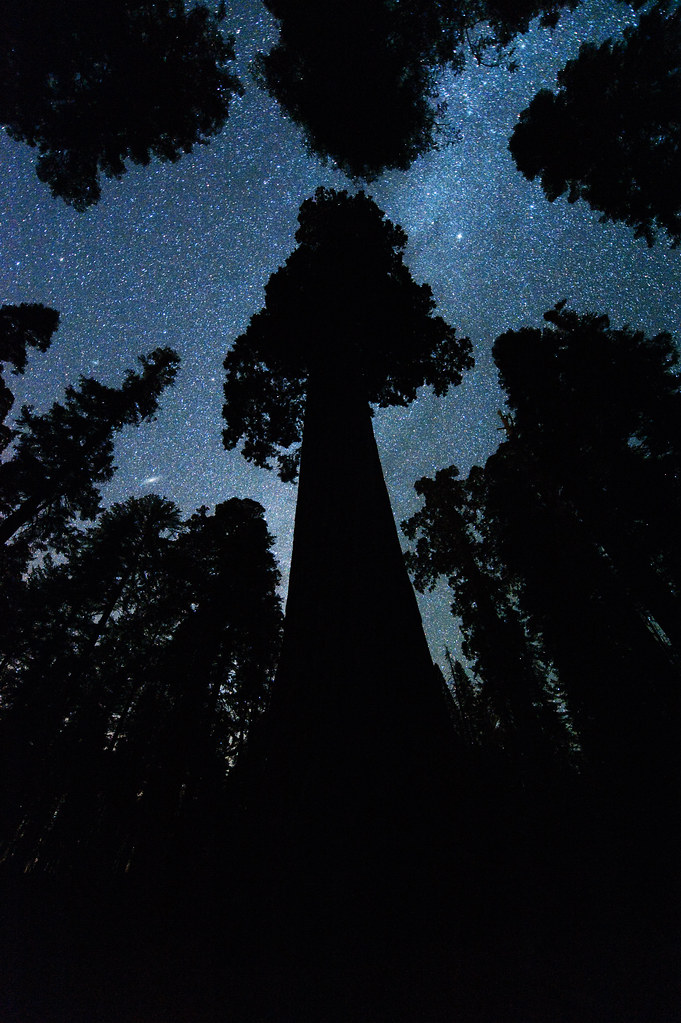 Andromeda and the Milky Way above the Oregon Tree (Grant Grove Kings Canyon National Park)