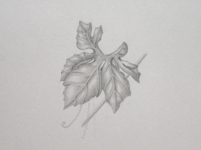 weed in pencil | Flickr - Photo Sharing!