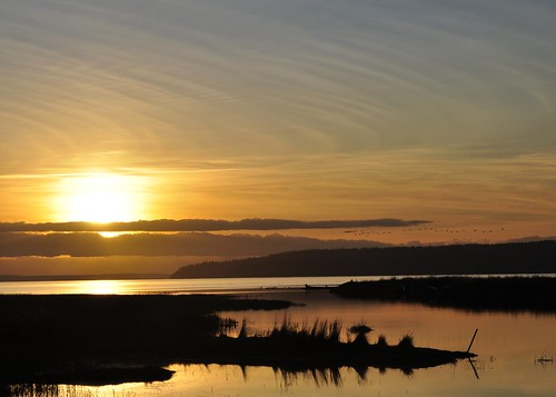 02-22-12 Geese Over Skagit Bay by roswellsgirl