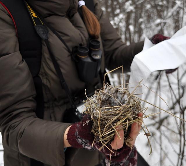nest 1 (near moose 1) 1