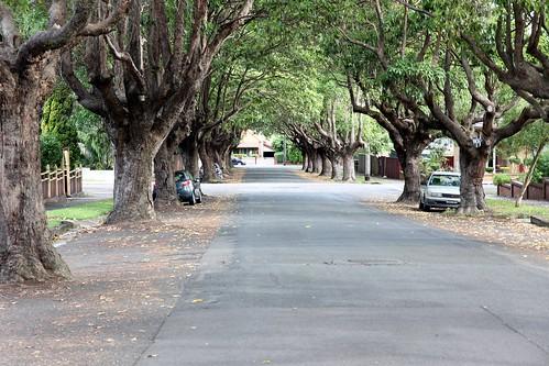 Notre avenue