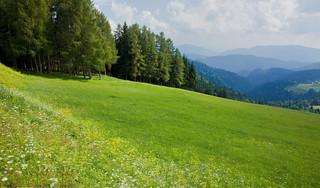 Pasture near Rogla