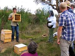 urban beekeeping 2