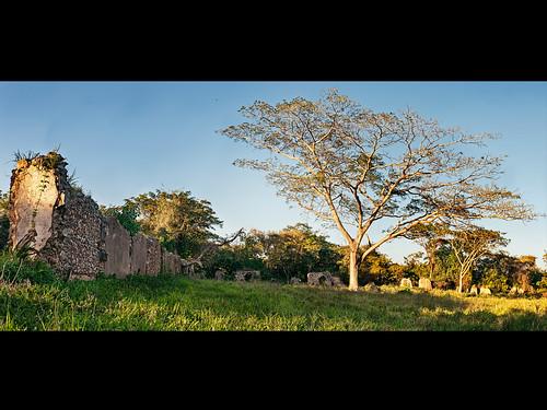 Roble de Olor...Angerona, Artemisa by Rey Cuba
