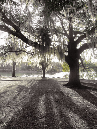 trees bw green day florida clear tallahassee accent lakeella powershotsd960is