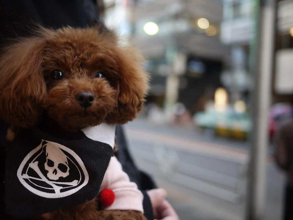 mastermind Dog