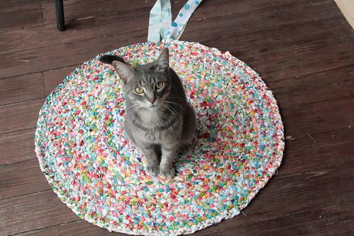 catsized