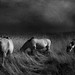 wild horses #20 by chrisfriel