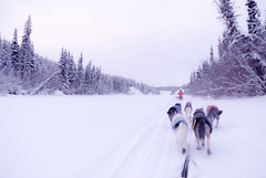 6793861981 4e2440ee13 m Where can I find information on dog sledding?