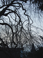 31. The Winter Branches