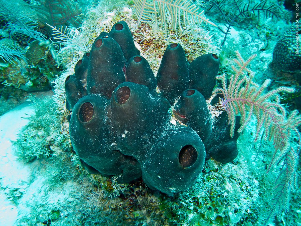 2012.01.12-2012.01.26_dive_safari_[cuba]-diving-025