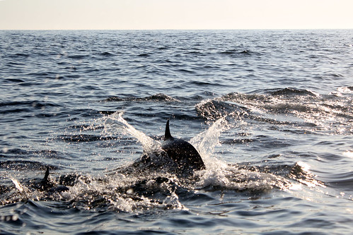bugheart_feb1_dolphins4