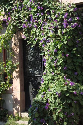 Burhaniye day 2 (Ayvalik): door with flowers
