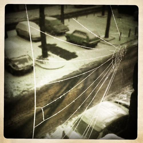 Snowy Spiderweb on Window