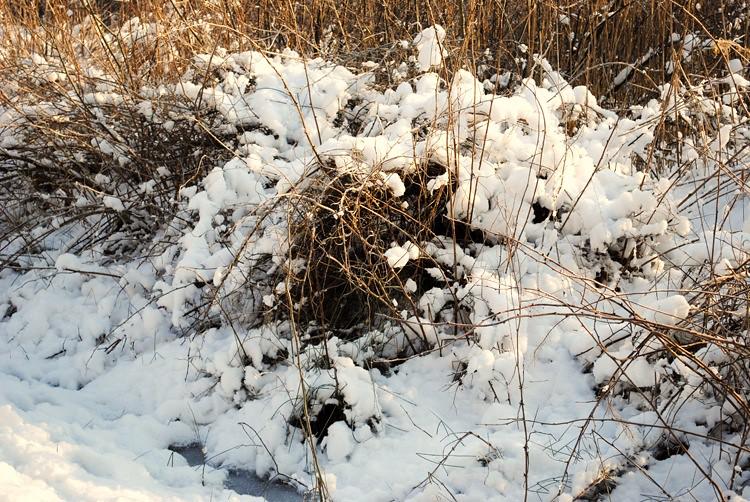 The Cold Swedish Winter