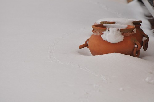 Pots in snow