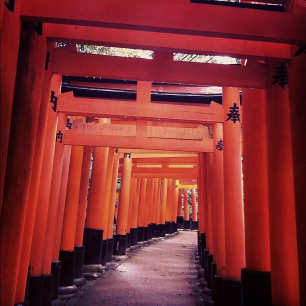 Conquered the famous red gates Torii! やっと山頂まで行った!