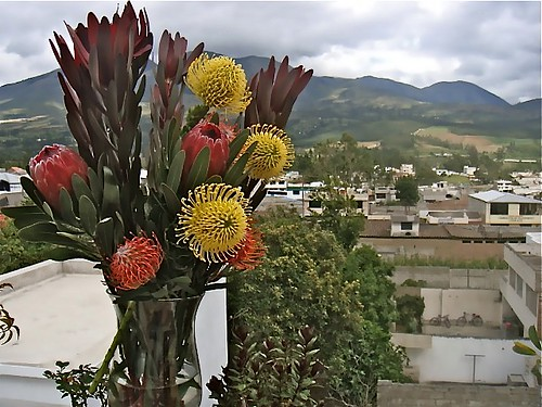 ecuador-flowers