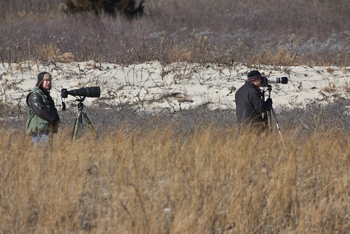 Photographers who approached too close to the Breezy Point Tip Snowy Owl.