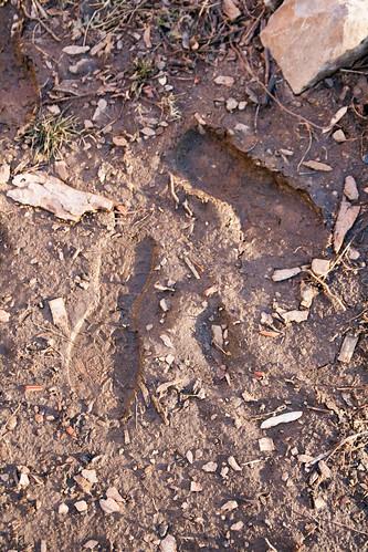 16muddyfootprints.jpg