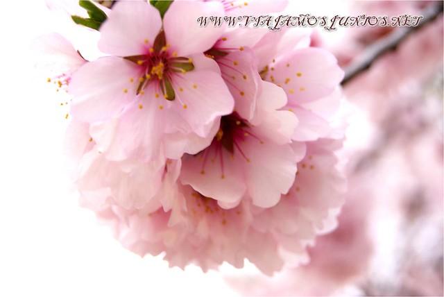 Blossoms in Madrid, Spain - Viajamos Juntos