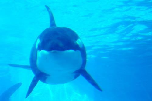Nagoya Aquarium 014r