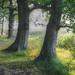 Tree Line by M4gic