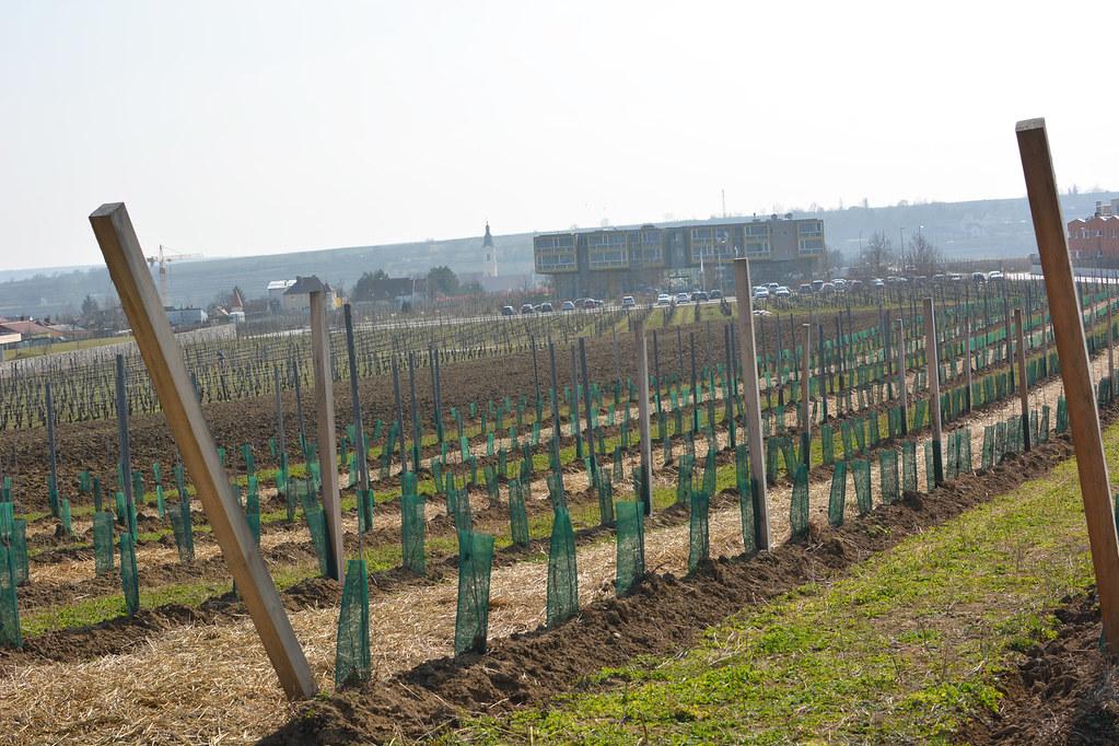 Weinweg_2