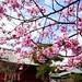 By Me.. #japan #tokyo #travel #old #sakura #love #photography #photographer #canon #kickstarterphoto #kickstarterarts #blackandwight #natgeo #canon_photos #design #art #1x #follow #followme #followforfollow #like4like #تابعوني #ليك #انشر#تصويري