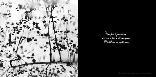 Calligrafie d'Anima (14)